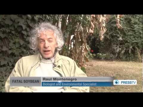 [Documentary] Fatal Soybean P1 - English