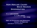 HOW DOES MERCURY CAUSE BRAIN NEURON DEGENERATION-ENGLISH