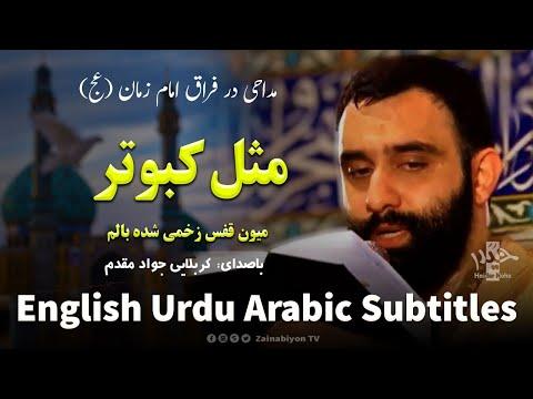 مثل کبوتر میون قفس (مداحی امام زمان) جواد مقدم  | Farsi sub English Urdu Ara