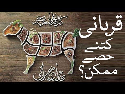 🎦  عید قربان 2 | ایک قربانی میں کتنے حصے ڈالے جاسکتے ہیں؟ - Urdu
