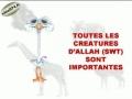Toutes les creatures d Allah sont importantes - francais