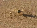 Animal Olympians - Gymnastics - Golden Wheel Spider - English