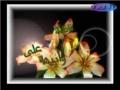 الصلاة على الزهراء عليها السلام - Nasheed - Arabic