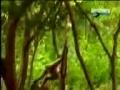Monkey Distrubing Lion Pats - Urdu
