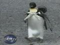 Cute Penguin Goes Shopping - English