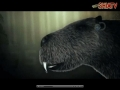 Huge Rat - a real monster - English