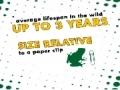Animal Facts - Spring Peeper - English