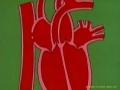 الكارتوني التعليمي Educational Cartoons - 6 القلب Heart - Arabic
