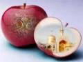 مشهد کربلای ایرانه Ya Imam Reza a.s - Farsi
