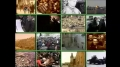 [01] Documentary - History of Quds - بیت المقدس کی تاریخ - Oct. 08. 2012 - Urdu