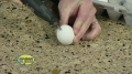 Folding Egg - Cool Science Experiment - English