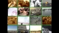 [40] Documentary - History of Quds - بیت المقدس کی تاریخ - Nov.22. 2012 - Urdu