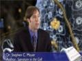 Stephen C. Meyer Is intelligent design science - Proof of supercreator-English