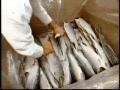 How Its Made - Smoked Salmon - English