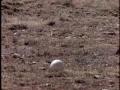 jackle vs. ostrich vs. eggs vs. vulture - english