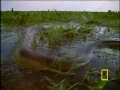 Surviving an Andaconda Attack - English