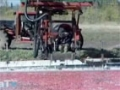How its Made Cranberries - English
