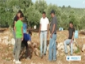 [21 Apr 2014] Israeli settlers attack Palestinian olive trees near Ramallah - English