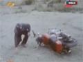 [Episode 02] Iranian Serial - Refugee   پناهنده - Farsi