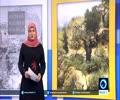 [7th April  2016] Israeli cuts 47 Palestinian olive saplings in East Jerusalem | Press TV English