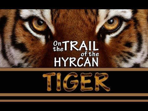 [Documentary] On the Trail of the Hyrcan Tiger (The Quest for the Allegedly Extinct Caspian Tiger in Iran) - Eng