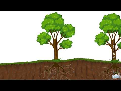 Tawhid Lesson 2 - The Roots of Religion