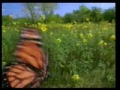 The Journey of the Monarch Butterfly - English