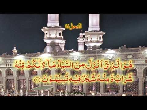 Chapter 16 An Nahl | HD Quran Recitation By Qari Syed Sadaqat Ali - Arabic