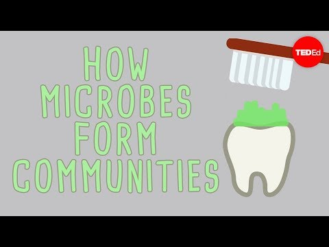 The microbial jungles all over the place (and you) - Scott Chimileski and Roberto Kolter - English