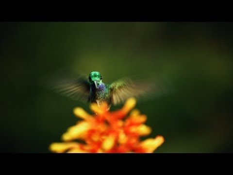 The hidden beauty of pollination - Louie Schwartzberg - Englsih