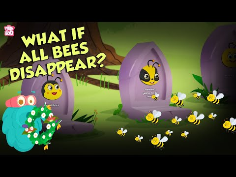 What If All BEES Disappear? | World Without BEES | The Dr Binocs Show | English