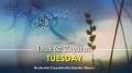 (5) Tuesday - Dua and Ziyarat - Arabic sub English
