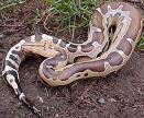 Natures Perfect Predators - Python - English