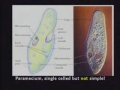 Does similarities in chromosome and DNA proves Darwin theory of evolution ? - English