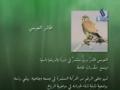 حقائق قرآنية - طيور وطائرات Birds and Planes - Farsi