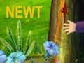 Alphabets - [N] is for Newt - English