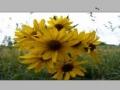 Adjust Image Resolution in Photoshop CS3 - English