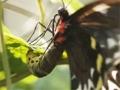 Metamorphosis Preview 01 Egg to Caterpillar-English