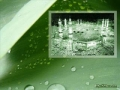 Quran Surah 86 - At-Taariq...The Morning Star - ARABIC with ENGLISH translation