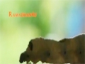 Worms who Fast too - Animal Instincts -  English
