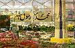 کاروانِ گلهای پاییزی در شهر - Farsi