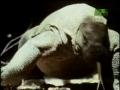 Komodo Dragon Teeth - English