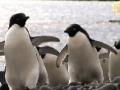 MashAllah - Penguins: No Fail at Mealtime - English