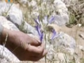 [13 Mar 2013] Natural weeds and Cure - قدرتی جڑی بوٹیاں اورعلاج - Urdu