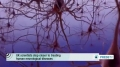 [10 Oct 2013] UK scientists step closer to treating human neurological diseases - English