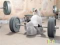 [04] Animated Cartoon Bernard Bear - The gym - All Languages