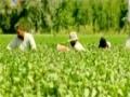 [Special Program] جڑی بوٹیاں   Herbs - Sahartv - 02 August 2014 - Urdu