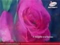 Glory be to Allah   Canticle [ Arabic Sub English ]